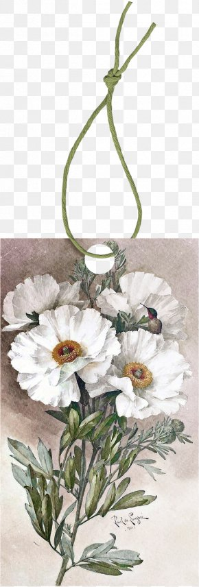 Rope - Poppy Romneya Watercolor Painting Botanical Illustration PNG