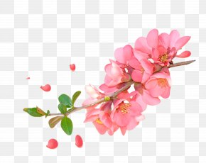 Pink Watercolor Peach Branches Decorative Patterns - Floral Design Watercolor Painting Flower PNG