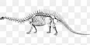 Dinosaur Bones - Apatosaurus Brontosaurus Tyrannosaurus Diplodocus Dinosaur PNG