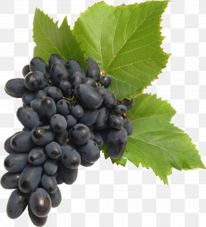 Grape Image Download, Free Picture - Common Grape Vine PNG