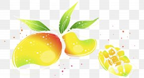 Vector Hand Painted Watercolor Mango Illustration - Superfood Wallpaper PNG