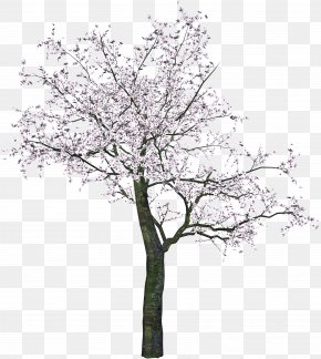 Tree Image - Cherry Blossom Spring Twig Tree PNG