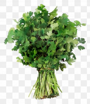 Coriander Crown Daisy Parsley Vegetable Spring Greens PNG