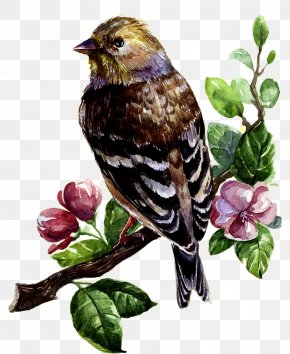 Oil Painting Bird Deduction Material - Bird Watercolor Painting Drawing Clip Art PNG