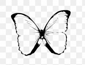 Butterfly Images Black And White - Butterfly Black And White Drawing Clip Art PNG