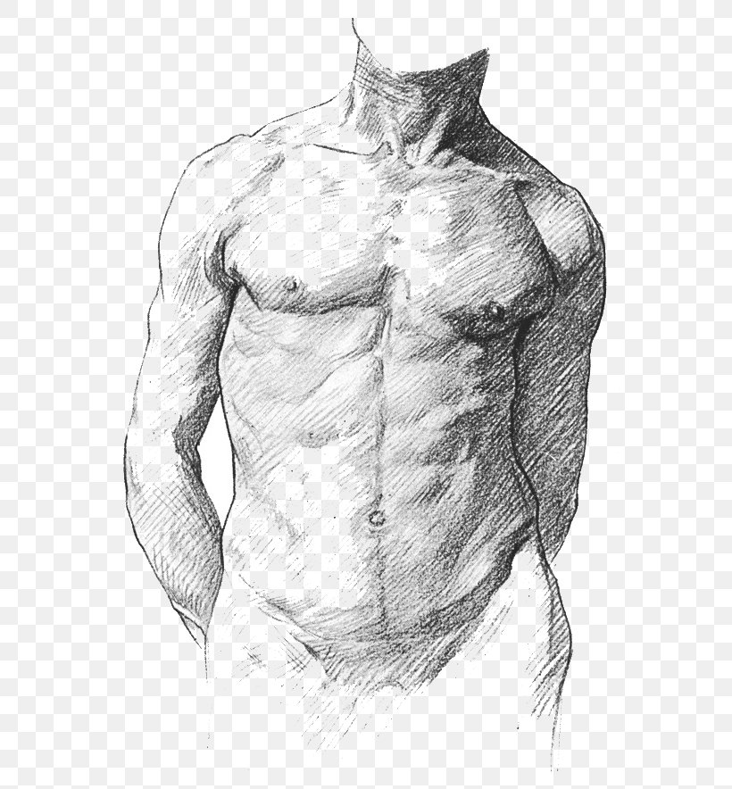 Human Anatomy For Art Students Human Anatomy For Artists Human Body Png 600x884px Watercolor Cartoon Flower