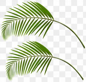 Leaf - Palm Trees Leaf Palm Branch Image PNG