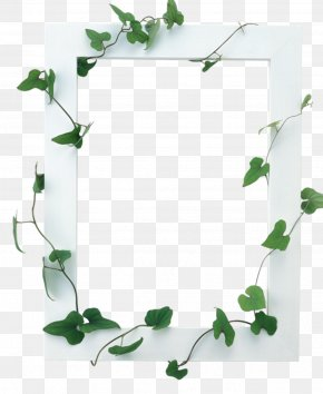 Vines Are Available For Free Download - Picture Frames PNG