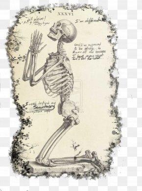 Skeleton - Praying Hands The Anatomy Of The Human Body Human Skeleton Prayer PNG