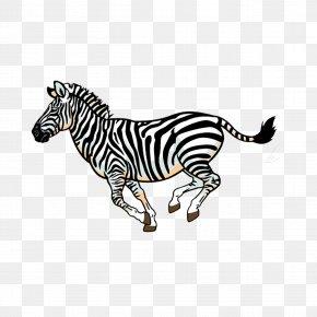 Zebra - Wildlife Lion Full-Color Animal Illustrations Fauna Of Africa Clip Art PNG