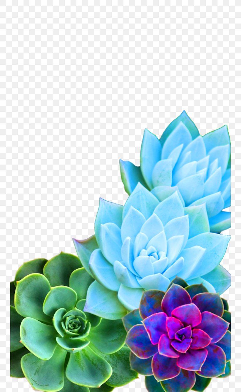 Succulent Plant Desktop Wallpaper Iphone 7 Cactus Image Png 750x1334px Succulent Plant Artificial Flower Cactus Cut