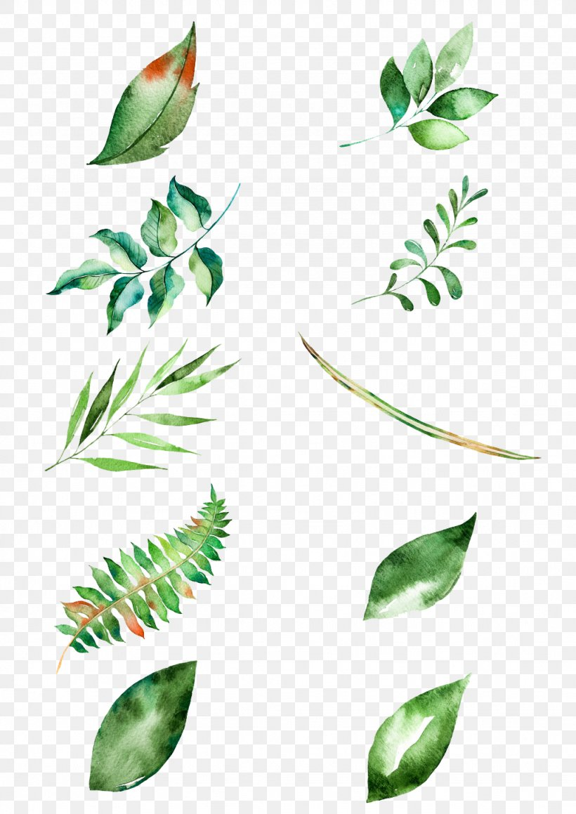 Leaf Watercolor Painting, PNG, 1024x1448px, Leaf, Branch, Drawing, Flora, Flower Download Free