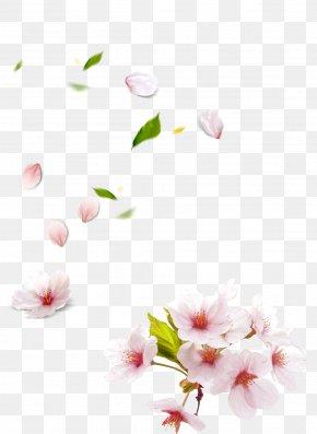 Peach Blossom Hand-painted Petals - Petal Peach PNG
