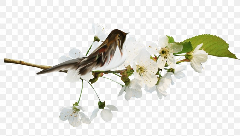 Clip Art, PNG, 1280x724px, Computer, Blossom, Branch, Computer Program, Dynamic Web Page Download Free