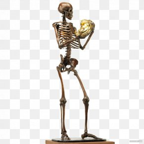 Metal Skeleton - Human Skeleton Sculpture Human Body U9ab7u9ac5 PNG