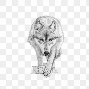 Wolf - Gray Wolf Coyote Drawing PNG