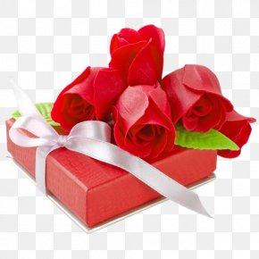 Valentine's Day - Valentine's Day Gift Heart Beach Rose Romance PNG