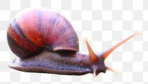 Snail - Snail Icon PNG