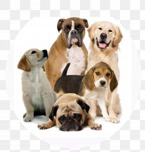 Dog 2 - Dog Clip Art PNG