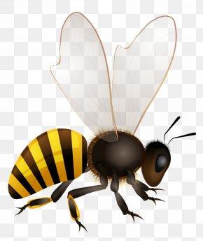 Bee - Honey Bee Hornet Illustration PNG