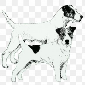 Russell Terrier - Dog Breed Jack Russell Terrier Parson Russell Terrier Companion Dog Sporting Group PNG