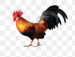 Big Cock Renderings - Cochin Chicken Vietnam Goat Rooster Poultry PNG