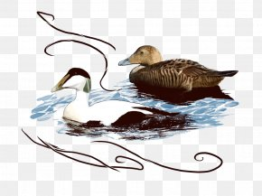 Duck - Duck Goose Icon PNG
