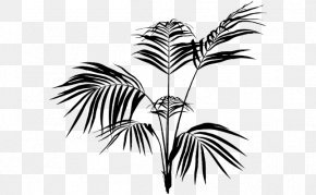 Leaf - Palm Trees Leaf Palm Branch Plants PNG