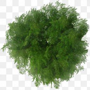 Tree Top View - Tree Plan File Viewer PNG