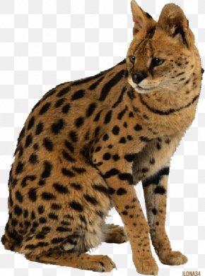 Leopard - Leopard Cat Tiger Giraffe Savannah Cat PNG