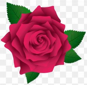 Pink Rose Image Clipart - Rose Pink Clip Art PNG
