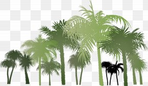 Palm Group PNG