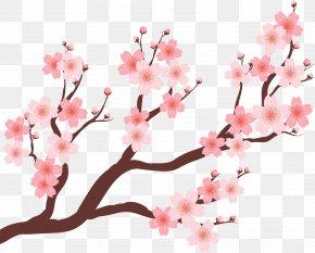 Beautiful Cherry Tree - Cherry Blossom Plum Blossom PNG