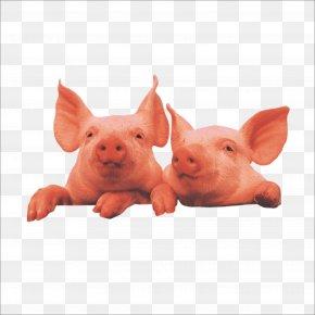 Pig - Domestic Pig Livestock PNG