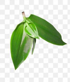 Leaf Psd - Branch Leaf Tree Shrub PNG