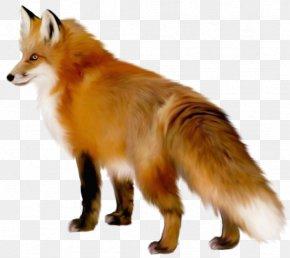 Transparent Fox Clipart - Fox Clip Art PNG