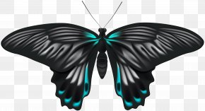 Black Blue Butterfly Clip Art Image - Image File Formats Lossless Compression PNG