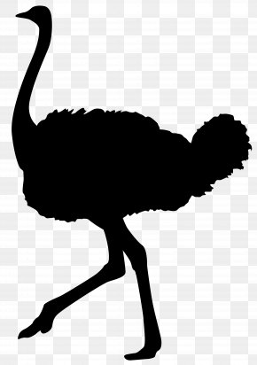 Ostrich Silhouette Transparent Clip Art Image - Common Ostrich Silhouette Bird Clip Art PNG