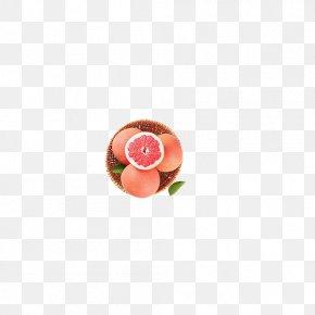 Grapefruit - Circle Fruit Pattern PNG