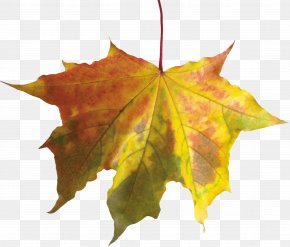 Autumn Leaf - Autumn Leaf Color PNG