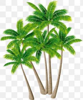 Coconut Tree Vector Material Green Plants - Coconut Tree Arecaceae Download PNG