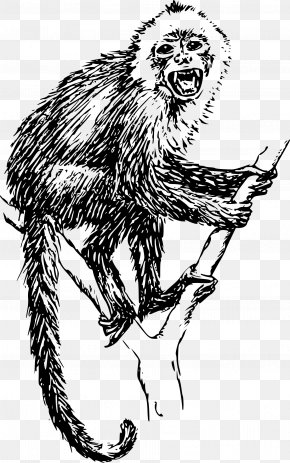 Monkey - Japanese Macaque Lion-tailed Macaque Capuchin Monkey Clip Art PNG