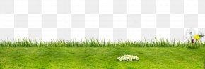 Green Field - Artificial Turf Grassland Flora Ecosystem Lawn PNG