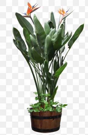 Beautiful Transparent Plants Potted - Houseplant Bird Of Paradise Flower Flowerpot PNG