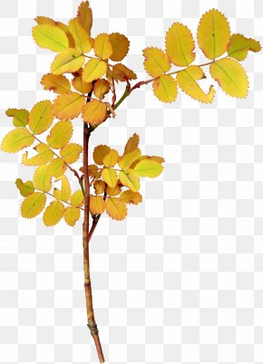 Autumn Leaves Of Plants - Twig Leaf Plant PNG