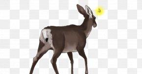 Goat - Antelope White-tailed Deer Goat Wildlife PNG