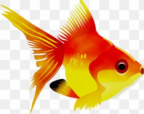 Color By Number Fish Coloring Book Goldfish - Sea Creatures Coloring Book Chamy PNG