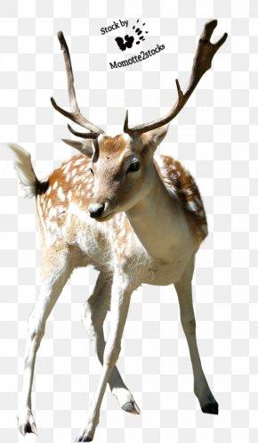 Deer Transparent - Deer Clip Art PNG