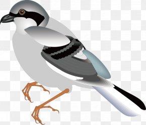 Animal,fly,sparrow,bird,Birds - Bird Flight Sparrow Clip Art PNG