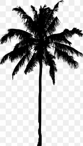 Date Palm - Arecaceae Date Palm Silhouette Tree Asian Palmyra Palm PNG
